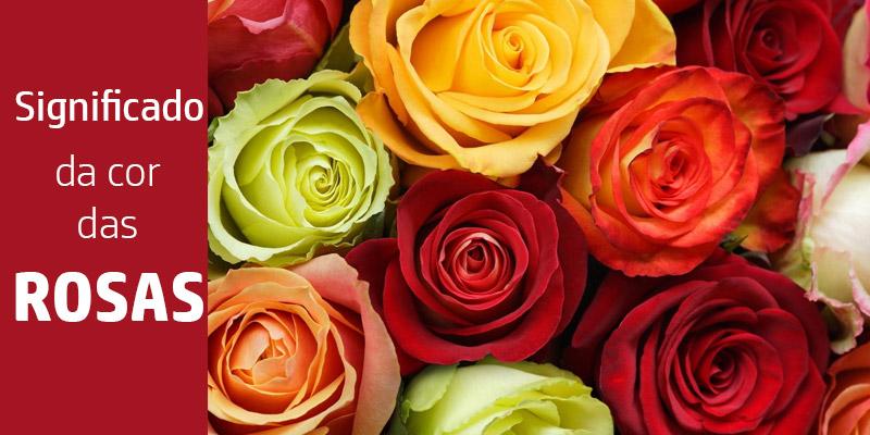Significado da cor das rosas
