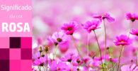 Significado da cor rosa